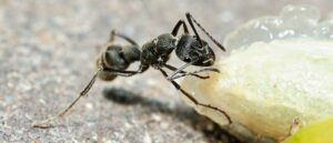 Summertime Ant Removal and Pest Control