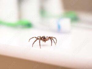 Summertime Spiders